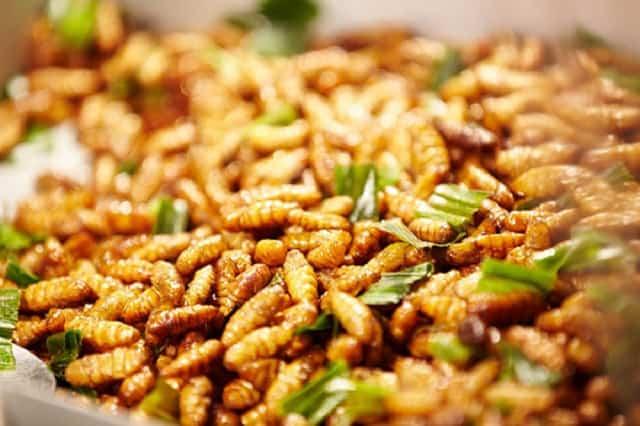Nhộng ong rừng - một trong những món đặc sản Tây Bắc nổi tiếng (Ảnh: ST)