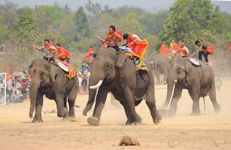 Hình Ảnh Lễ hội Đua voi