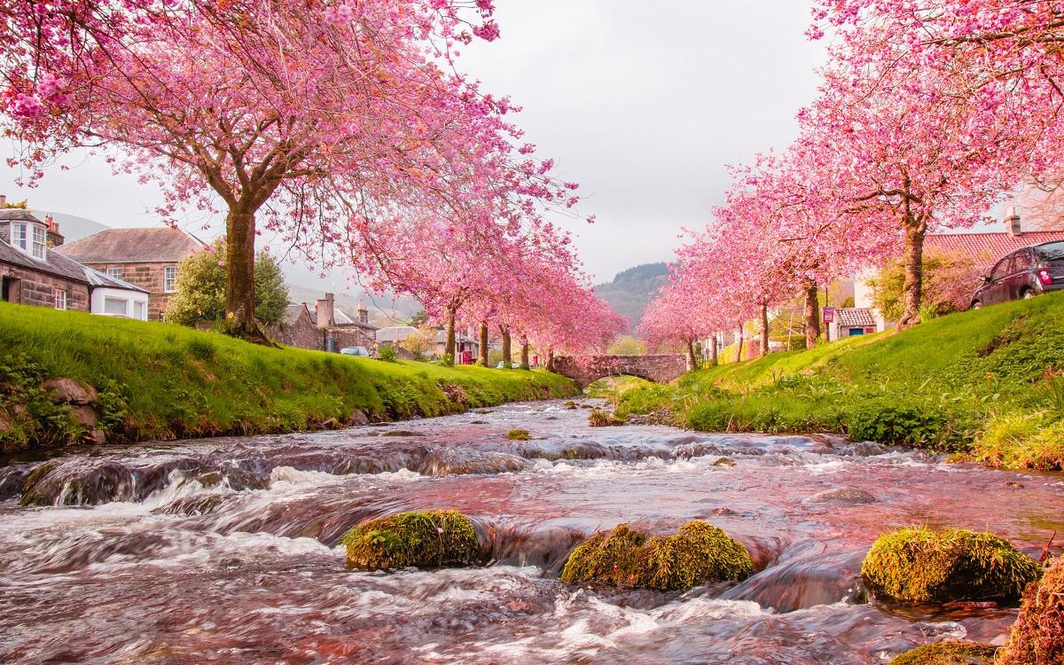 Hoa anh đào Nhật Bản nở mùa nào trong năm? Lịch ngắm hoa anh đào 2018